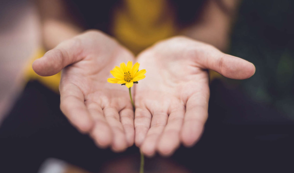 A set of hands holds out a small yellow flower.